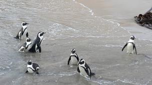 penguene yakın.12jpg