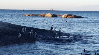 penguenler karada