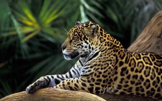 Accueil-D-coration-Art-Mur-Animaux-Jaguar-For-t-Tropicale-peinture-L-huile-Image-HD-Imprim.jpg_640x640