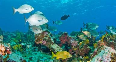180-Bahamas-Harbour-Island-