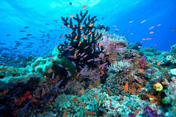 reef-aj