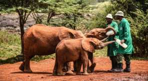 David-Sheldrick-Wildlife-Trust-870x480-1