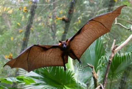 kidike-pemba-flying-fox-forest[1].jpg