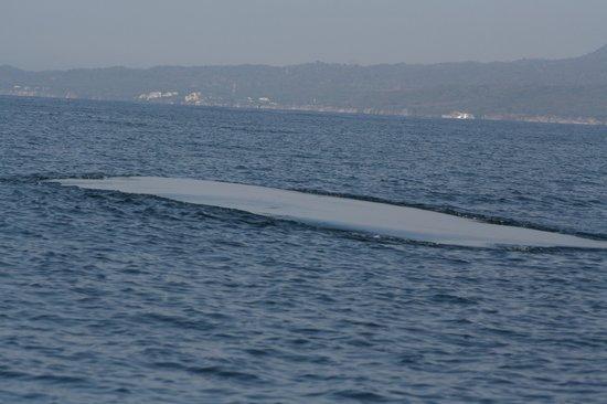 a-whale-footprintawesome