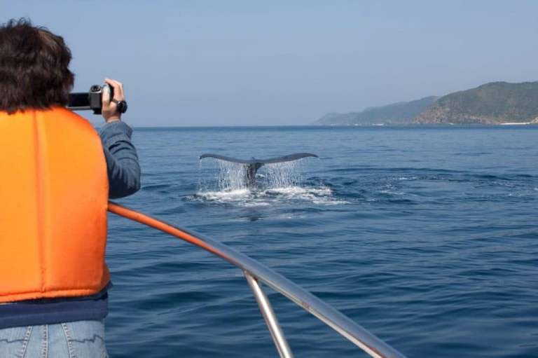 Whale_watching_in_cape_town-1024x682