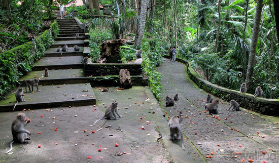 ubud-monkey-temple[1]
